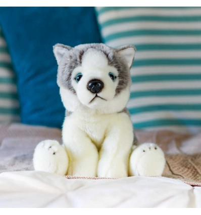 Pies Husky syberyjski