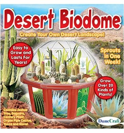 Domowe Terrarium z Pustynnymi Roślinami